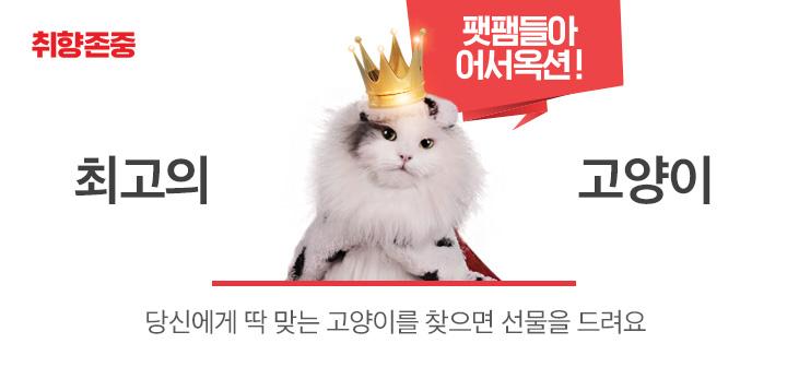 최고의 고양이