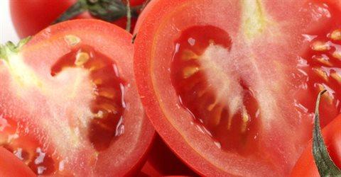 완숙 토마토2.5kg(3~4번과)#2개구매시6kg