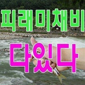 피래미채비 줄파리 찌파리낚시 도깨비 견지대 은어