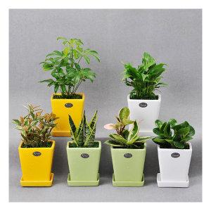 가꾸지오  공기정화식물 컬러화분6P세트
