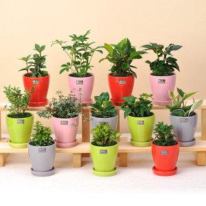 가꾸지오  공기정화식물 라인원화분 도트화분총집합