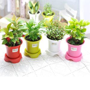 가꾸지오  공기정화식물 하이클래식화분