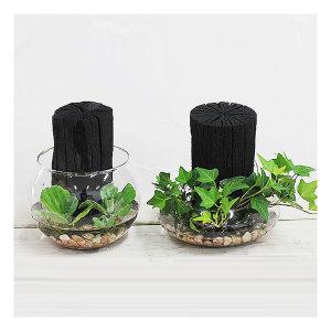 가꾸지오  수경식물 숯정원글라스