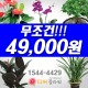 강화/강화군꽃배달/꽃집/화원 동서양난/관엽/꽃바구니