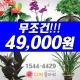관엽화분/축하난 여수/여수시 /꽃집/화원/꽃배달