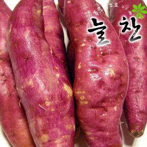 꿀고구마10kg 11900원/호박 진짜밤고구마특가세일
