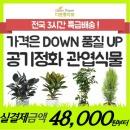 다운플라워 관엽 화분나무 공기정화식물  꽃배달