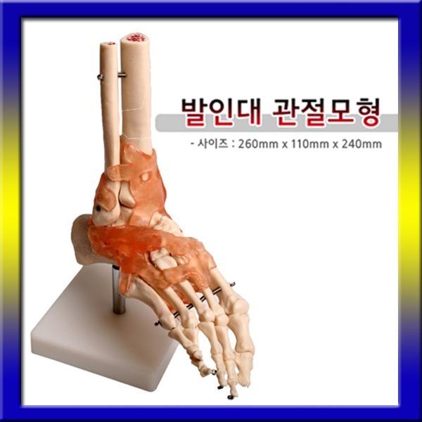 발인대 관절모형 1개/발골격 인체모형 발모형 신체