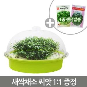 무공해 콩나물 새싹재배기 그린+채소씨앗/천연가습기