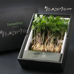 문영철님의 장성 새싹삼(인삼) 50뿌리(특품) 예약발송
