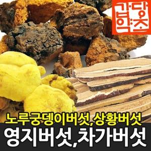 상황버섯 영지버섯 노루궁뎅이 찔레버섯 운지버섯