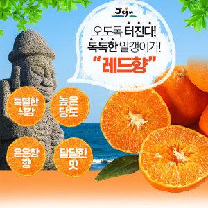 서귀포농원 첫수확 천혜향 레드향 10kg 선물용