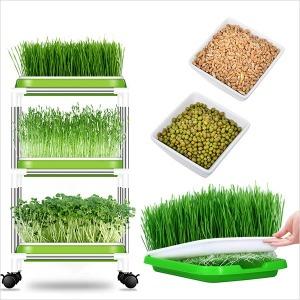 새싹보리 밀싹 수경재배기 새싹재배기