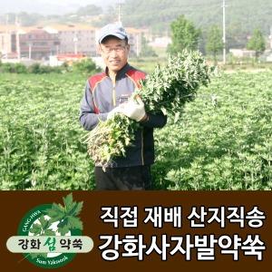 강화 사자발 약쑥/즙/진액/쑥차/약쑥환/쑥/좌욕기/뜸
