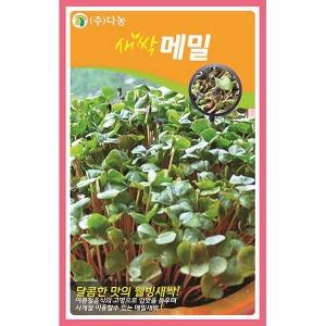 화분백화점 새싹씨앗 씨앗 채소씨앗 새싹메밀씨앗