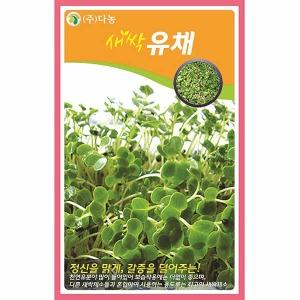 화분백화점 새싹씨앗 씨앗 채소씨앗 새싹유채씨앗