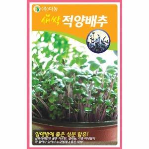 화분백화점 새싹씨앗 씨앗 채소씨앗 새싹적양배추씨앗