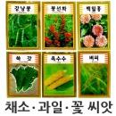 채소 과일 꽃 과학교재씨앗판매 자연관찰실험용씨앗
