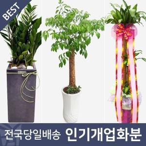 개업화분 전국꽃배달 개업식화분 공기정화식물