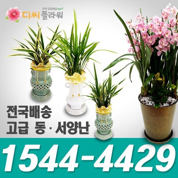 고급난 동양난/서양난 개업/승진축하 꽃배달/꽃집화원