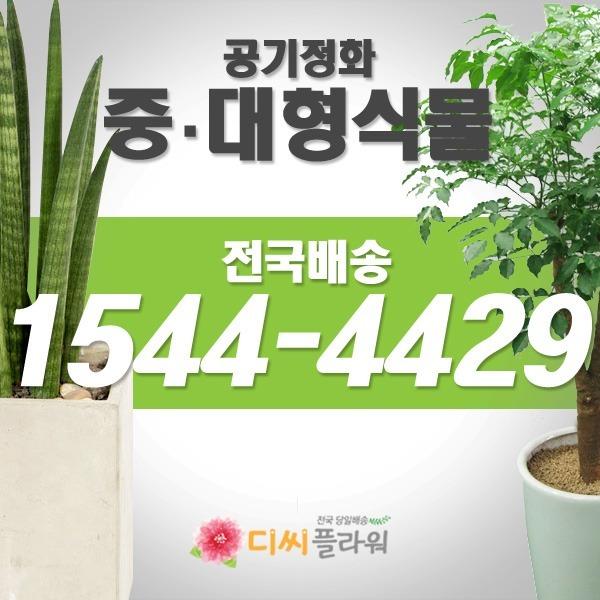 관엽/공기정화/화분/개업 꽃배달/꽃집/화원