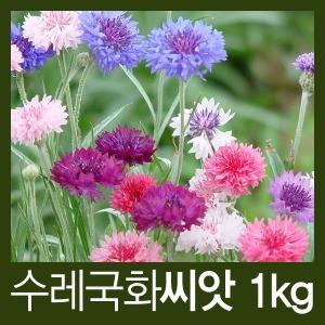 수레국화 씨앗 1kg / 야생화씨앗 도매 전문 온라인샵