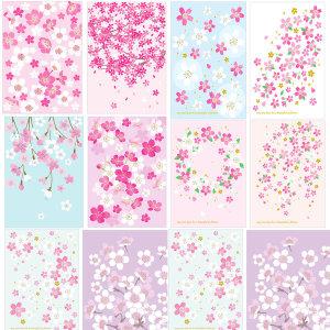 체리블라썸(벚꽃) 엽서 100장 외 엽서모음