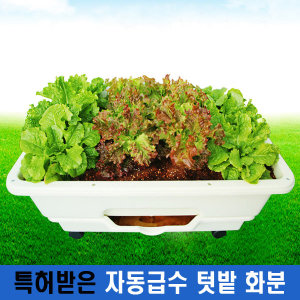 자동 급수 텃밭 화분 아파트 집 베란다 꽃 상추 야채