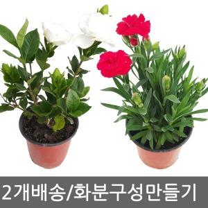 2개배송/봄꽃/공기정화식물/미니화분/화초/다육