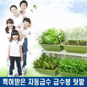 자동급수 텃밭 재배기 아파트 집 주택 베란다 꽃 상추