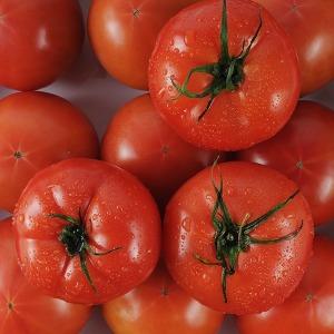 正品 토마토 5kg 영양만점 맛좋은 토마토