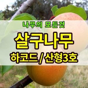 살구나무묘목(왕살구.산형3호.하코드) 2년생 판매중