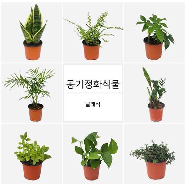 네오플라워/ 공기정화식물 다양한 종류 /산세베리아/