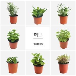 허브 낱개판매 1400원  로즈마리/애플민트/바질/