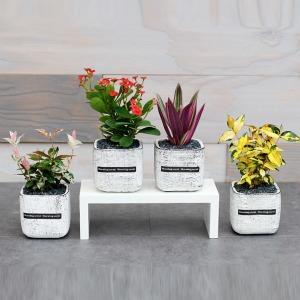 공기정화식물 테라화분