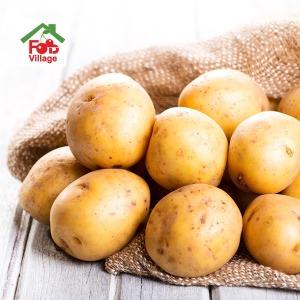 포근포근  2019년 햇 감자 양파 5kg