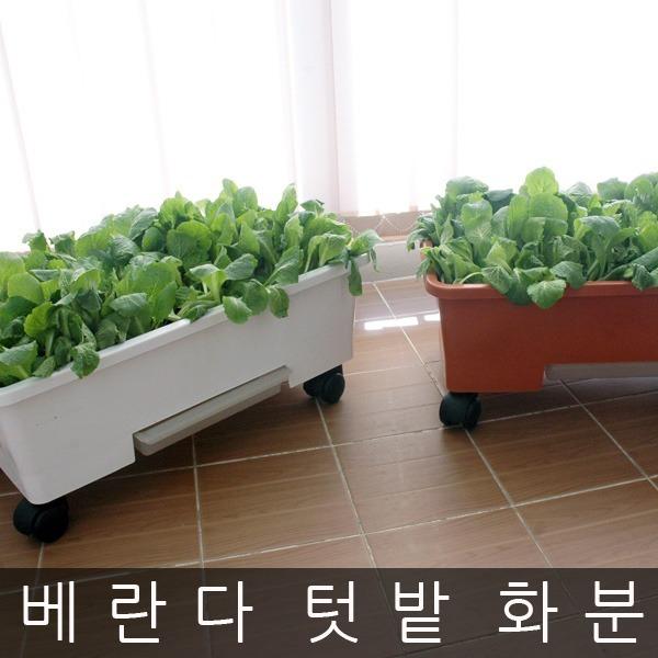 베란다텃밭화분 상추화분 흙 초화박스 유기농재배