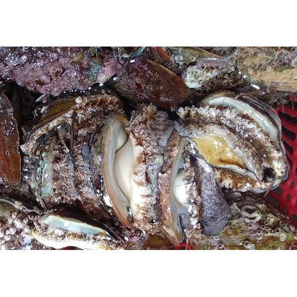 자연산전복산소포1kg(8-10미)  통영수산물