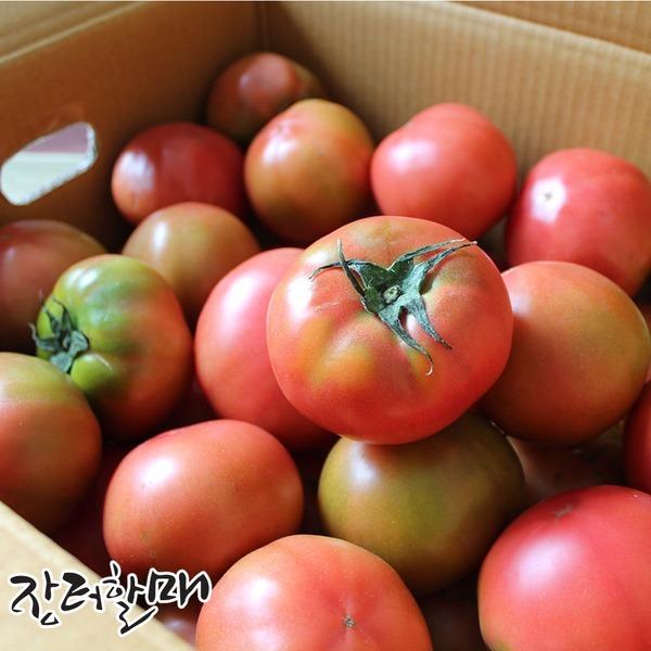 싱싱한 제철 토마토 3kg 5kg 15900
