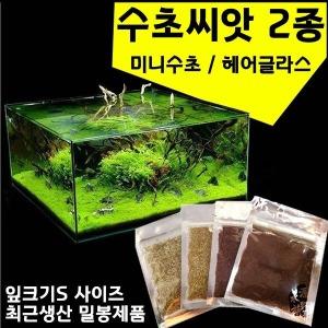 수초씨앗/씨앗수초/수초씨/전경 수초/수초