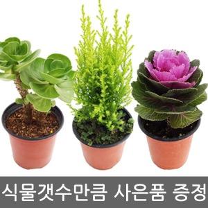 신상업뎃/공기정화식물/허브/꽃/다육/미니화분