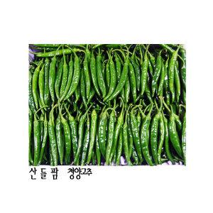 산들팜풋고추(청양고추)(땡초)(특품)5kg