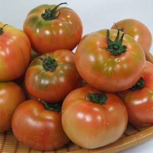 정품  찰토마토 5kg/특가 세일 합니다