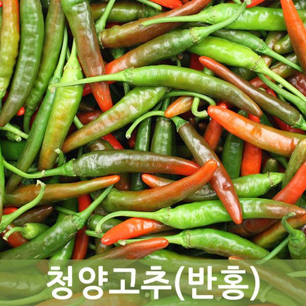 청양고추(반홍)10kg    두리반농산