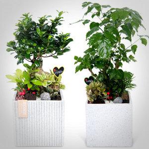 관엽화분/동양난/서양난/전국꽃배달 꽃집
