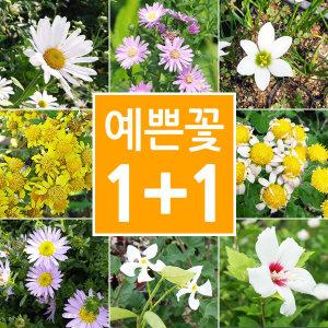 1+1화초/야생화/꽃/화분/봄꽃/모종/묘목/수경식물