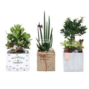개업화분/축하 화분배달/꽃배달서비스/공기정화식물