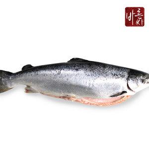 노르웨이 슈페리어급 연어 6.5kg 통마리