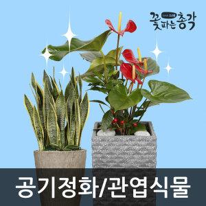 대형화분 당일도착 개업/화환/꽃배달/행사/관엽