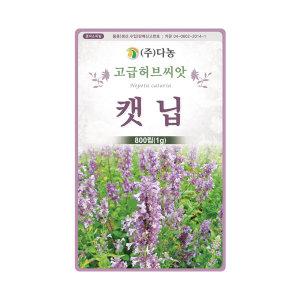 화분백화점 화훼 허브씨앗 캣닙 개박하